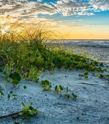 Sun setting on a South Carolina sand dune at the beach.