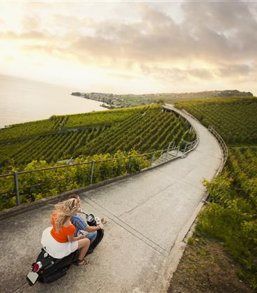 Moped  driving down a path through vineyards.