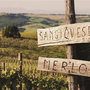 Sign in front of a vineyard.