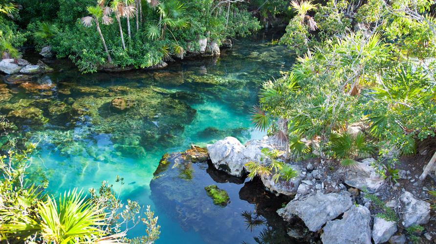 Clear water at Wekiwa Springs State Park, Florida.