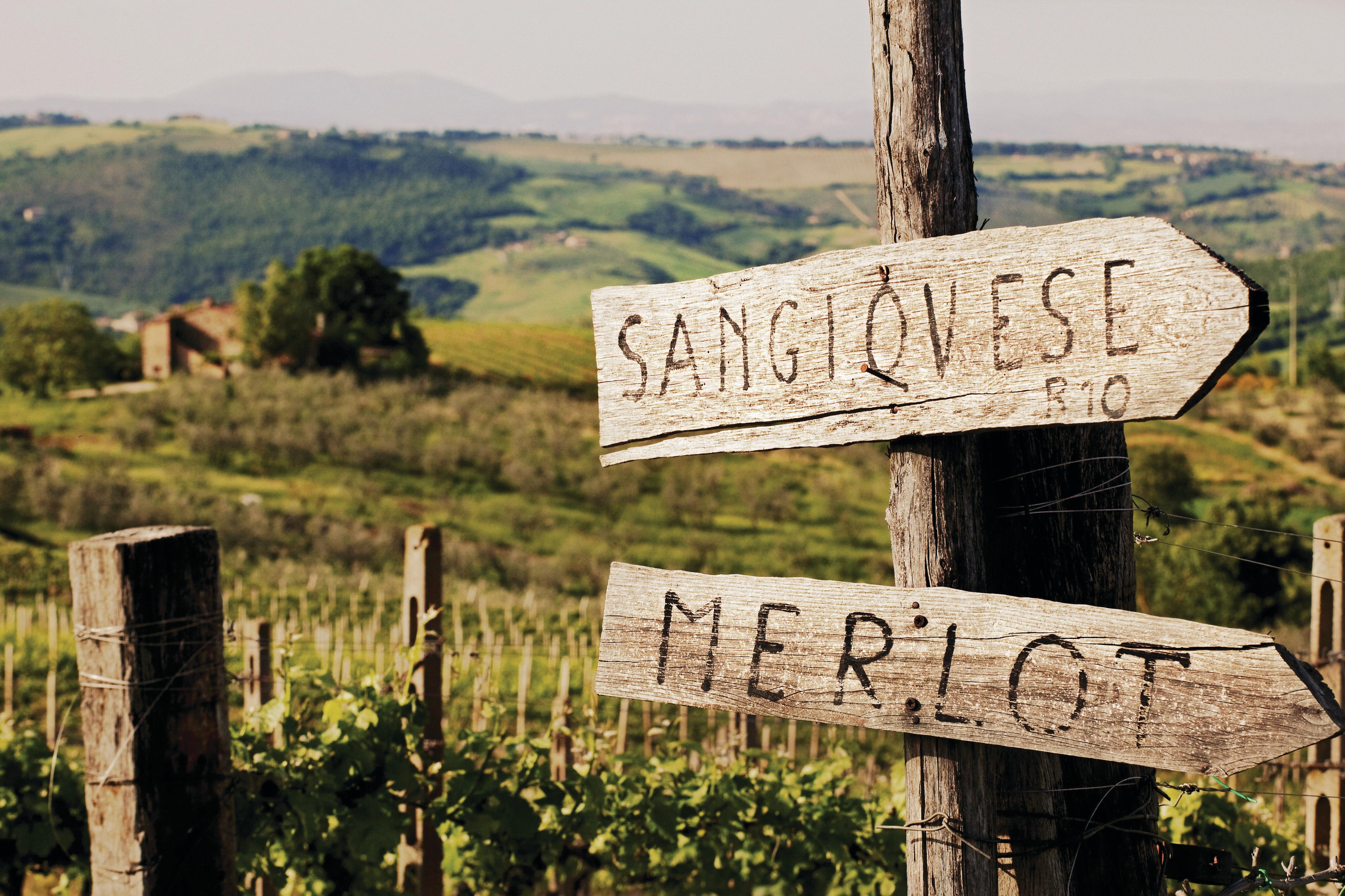 Wine tour sign, Tuscany, Italy