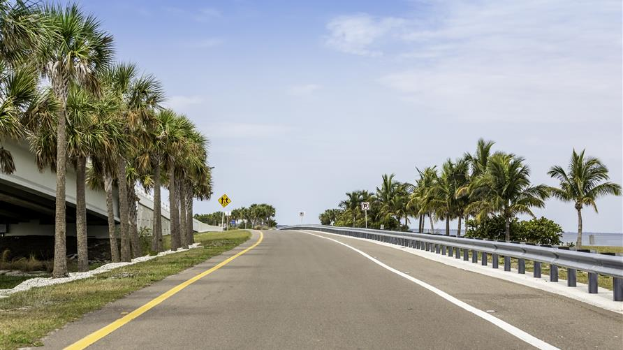 Palm tree lined road on a Florida road trip.