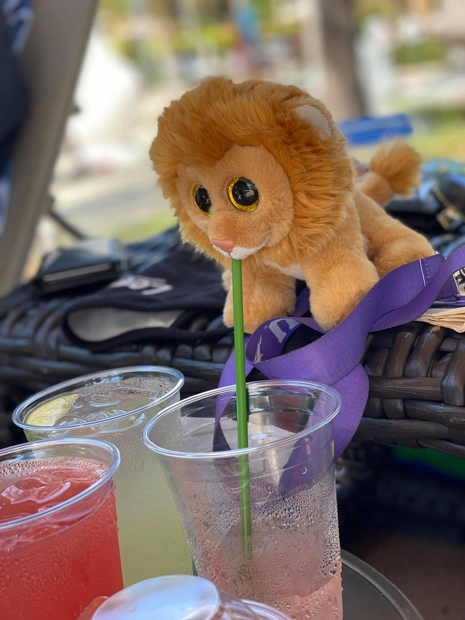 Little Louie the Lion enjoying drinks poolside at Hilton Grand Vacations at MarBrisa resort in Carlsbad, California.