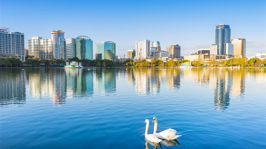 Two swans swimming in Lake Eola in downtown Orlando, Florida.