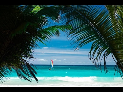 Shot through palm trees looking out towards a sailboat on the ocean.
