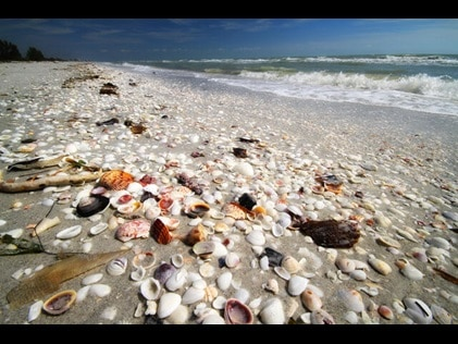 Close up of seashell covered shoreline on a Florida beach.