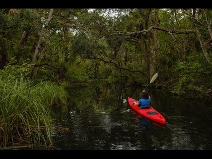 Woman kayaking through a tree-lined waterway in Charleston, South Carolina.