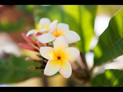 Close up shot of yellow and white tropical flower.