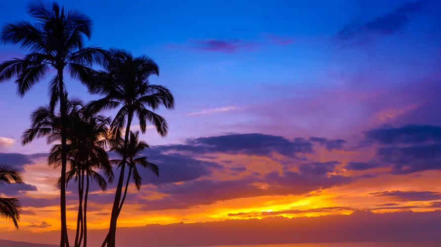 Palm tree silhouette against a colorful Hawaiian sunset.